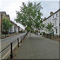 SZ4988 : Newport: Carisbrooke Road by John Sutton