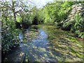 SP4816 : The River Cherwell by Steve Daniels
