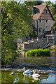 SO5174 : Swans, Horseshoe Weir by Ian Capper