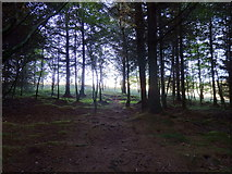 NY7969 : Inside the copse on Ridley Common by Rudi Winter
