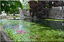ST5545 : Moat of the Bishop's Palace, Wells by David Martin