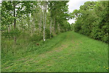 SP9758 : Path for not horses by the edge of the young wood by Philip Jeffrey