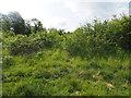 TL8294 : Natural vegetation by David Pashley