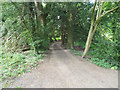 TL8394 : Woodland driveway to house by David Pashley