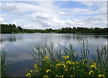 SO8891 : Lakeside Scene by Gordon Griffiths