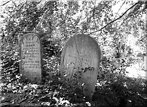 TG2408 : Graves of the Colman Family by Evelyn Simak