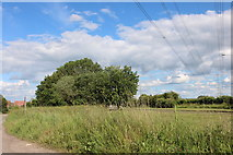SP7915 : Field by the A41 near Quarrendon by David Howard