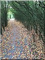 SP1666 : Path through a thicket of wild plum by Robin Stott