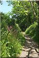 SX8854 : Bridleway approaching Combe Lane by Derek Harper