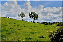 H5375 : Trees on a hill, Oxtown by Kenneth  Allen