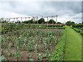 SJ5410 : Kitchen Garden, Attingham Park by David Dixon