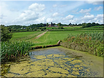 SP1876 : Farmland and lock sidepond near Knowle, Solihull by Roger  Kidd