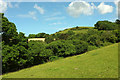 SX8755 : Hillside near Lower Greenway by Derek Harper
