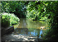 TQ0374 : River Colne at Stanwell Moor by Des Blenkinsopp