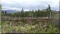 NN6390 : Woodland near the Raeburn Hut by Richard Webb