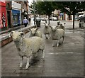 NY1381 : Small flock of sheep, Lockerbie by Richard Sutcliffe