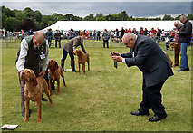 NT7233 : The 2019 Kelso Dog Show by Walter Baxter