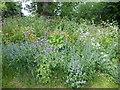 TQ2976 : Wild flowers in the Eden Garden, Clapham by Marathon