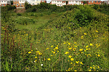 SX9066 : Land near Nuthatch Drive, Torquay by Derek Harper