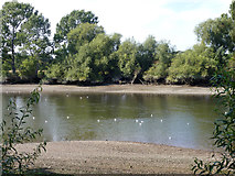 TQ1776 : River Thames below Isleworth by Robin Webster
