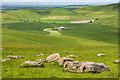 SU1064 : Sarsen stones by Ian Capper