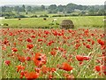 SK2472 : Stone shelter in a field of poppies by Graham Hogg