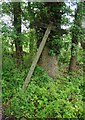 SO7961 : Public bridleways fingerpost, near Wichenford, Worcs by P L Chadwick