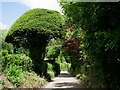 TQ0646 : Topiary at Brook by Peter Trimming