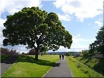 NT9953 : Walking the Elizabethan Walls in Berwick on Tweed by Jennifer Petrie