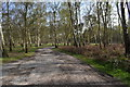 TM3450 : Picnic area in Rendlesham Forest by Simon Mortimer