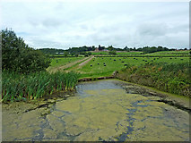 SP1876 : Lock sidepond near Knowle, Solihull by Roger  Kidd