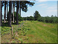 TL8189 : Grassy track beside fenced off conservation area by David Pashley