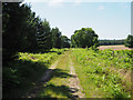 TL8189 : South down grassy track by David Pashley