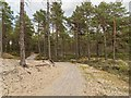 NH9961 : Path in Culbin Forest by valenta