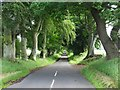 NT6427 : Tree-lined road by Philip Halling