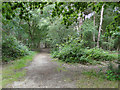 TM4158 : Footpath south from the roadway in Black Heath Wood by Adrian S Pye