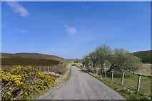 NC8855 : Gorse and rowan on a minor road along Strath Halladale by Tim Heaton