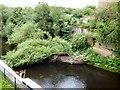 SJ8990 : Tree across the River Goyt by Gerald England