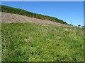 NS3298 : Clearfell in Glen Dougles by Philip Halling