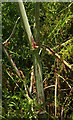 SX8557 : Hemlock, Whitehill Lane by Derek Harper