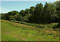SX8557 : Field by Yalberton Stream by Derek Harper