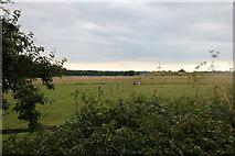 SU7877 : Fields by New Bath Road, Twyford by David Howard