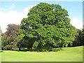 NX6054 : Cally Palace trees [3] by M J Richardson