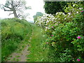 TL1224 : The Chiltern Way at Mangrove Hall, Mangrove Green by Humphrey Bolton