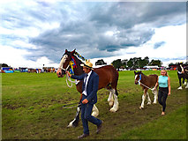SJ7177 : Royal Cheshire County Show 2019 by Jeff Buck