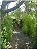 NY3303 : Skelwith Bridge to Slater Bridge [13] by Michael Dibb