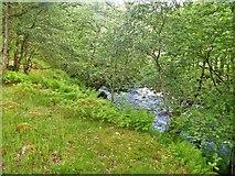 NY3203 : Skelwith Bridge to Slater Bridge [22] by Michael Dibb