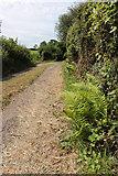 SD5273 : A walk along Kirkgate Lane (3) by Kate Jewell