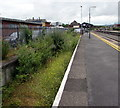 SN4119 : Vegetation below platform 1, Carmarthen railway station by Jaggery