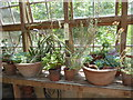 TQ7468 : Succulents in the greenhouse at Restoration House by Marathon